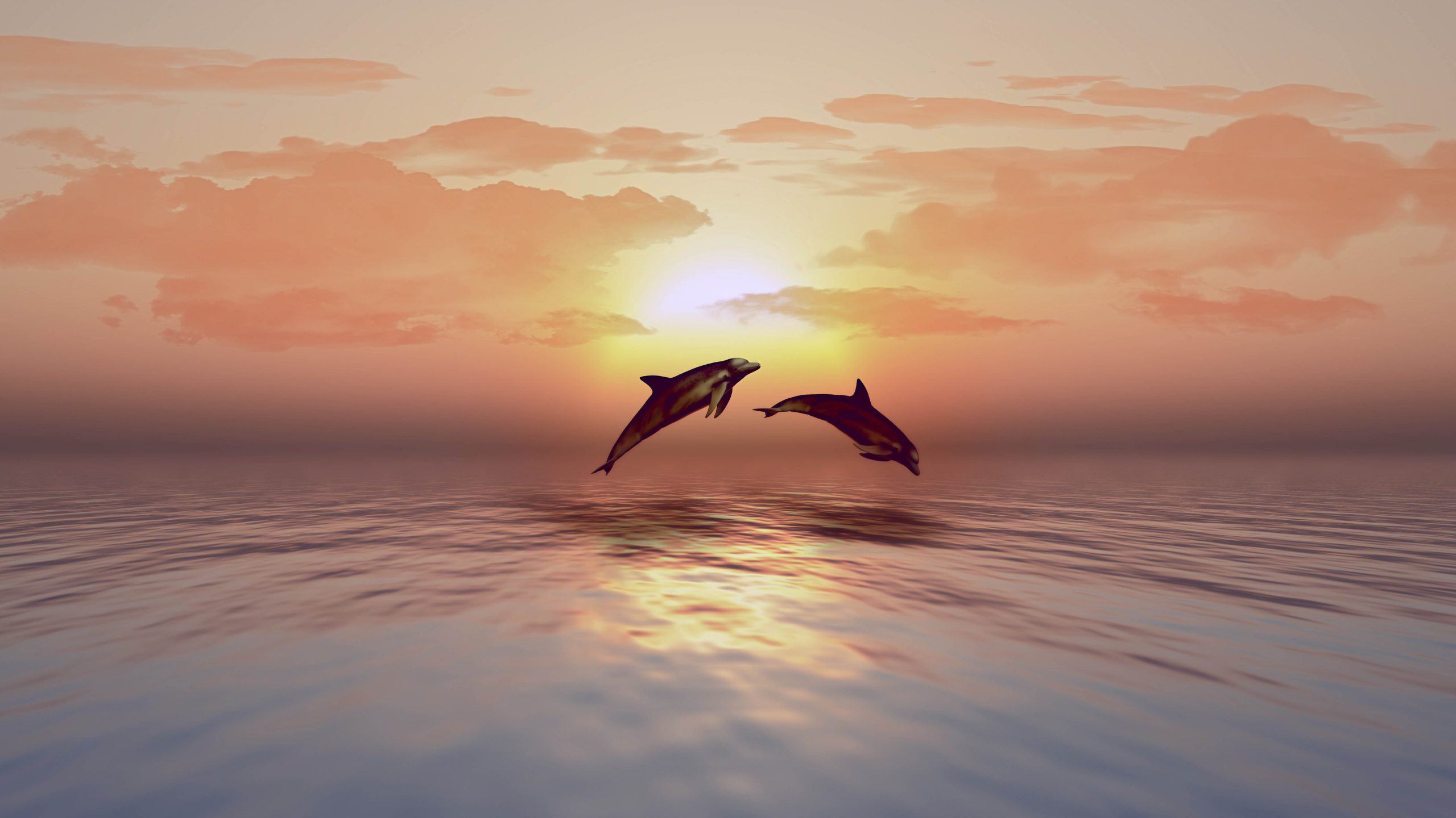 Dolphins playing in sunset ocean