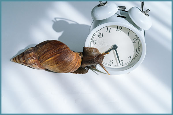 Snail and clock